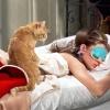 Lista | 7 filmes em que os gatos roubaram a cena